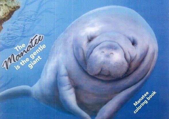 manatee swimming